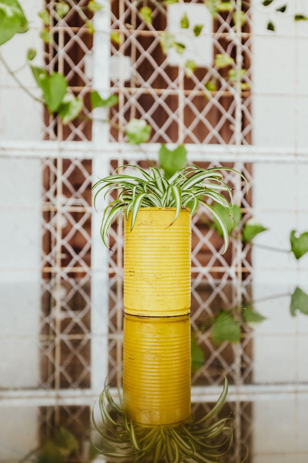 Plant a Garden for Your Kitchen